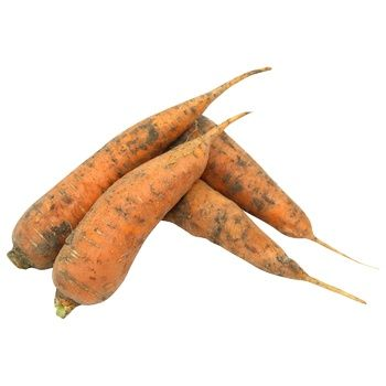 Carrots - buy, prices for Metro - photo 1