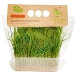 Мікрогрін Ігуана Мікрозелень пшениці