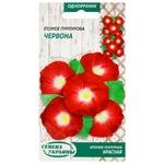 Semena Ukrayiny Morning Glory Purple Red Seeds 0.5g