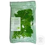 Greens basil green fresh