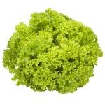 Lollo Biondo Lettuce, 1 Bunch