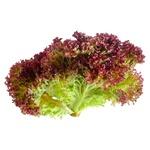 Lollo Rosso Lettuce, 1 Bunch