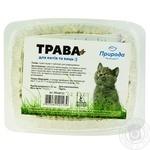 Трава быстрорастущая для кошек