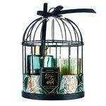 Stay Wild Set in Cage Candle + Aromatic Diffuser 80ml