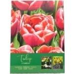 Bulb tulip
