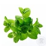 Зелень мята свежая