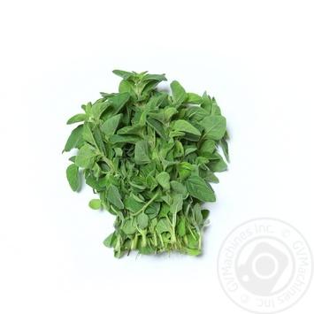 Зелень орегано свежая