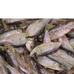 Fish sprat Amstor sun dried
