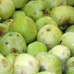 Фрукт яблука антоновка свіжа