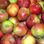 Фрукт яблука пріма свіжа