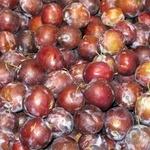 Fruit plum pink fresh