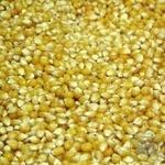 Овощи кукуруза для попкорна