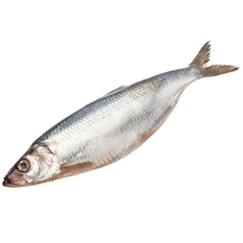 Salted herring 400+ - buy, prices for Metro - image 1