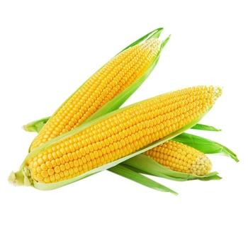 Кукуруза 1шт - купить, цены на Метро - фото 1
