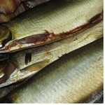 Рыба сельдь иваси