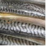 Fish atlantic mackerel Samyi smak light-salted vacuum packing Ukraine