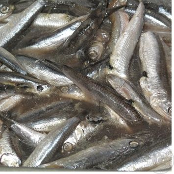 Рыба хамса слабосоленая