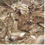 Морепродукты осьминог Каролина Осьминог замороженная Украина