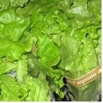 Зелень салат батавія Фреш енд грін свіжа у горщиках Україна