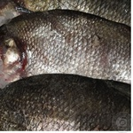 Fish bream fresh Ukraine