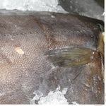 Fish halibut frozen Ukraine