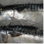 Рыба скумбрия замороженная Украина
