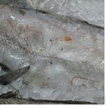 Fish atlantic cod frozen Ukraine