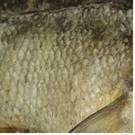 Fish bream Shelf sun dried Ukraine