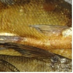 Fish bream Shelf cold-smoked Ukraine