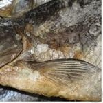 Риба лящ Норман в'ялена Україна