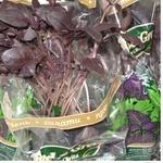 Greens basil Fresh&green purple fresh of pot Ukraine