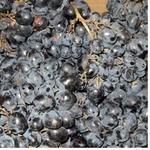 Фрукт виноград черное свежая