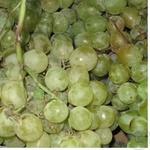 Fruit grape white fresh Ukraine