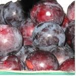 Fruit plum blue fresh Ukraine