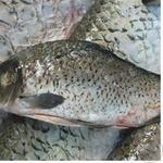Fish carp gutted Ukraine