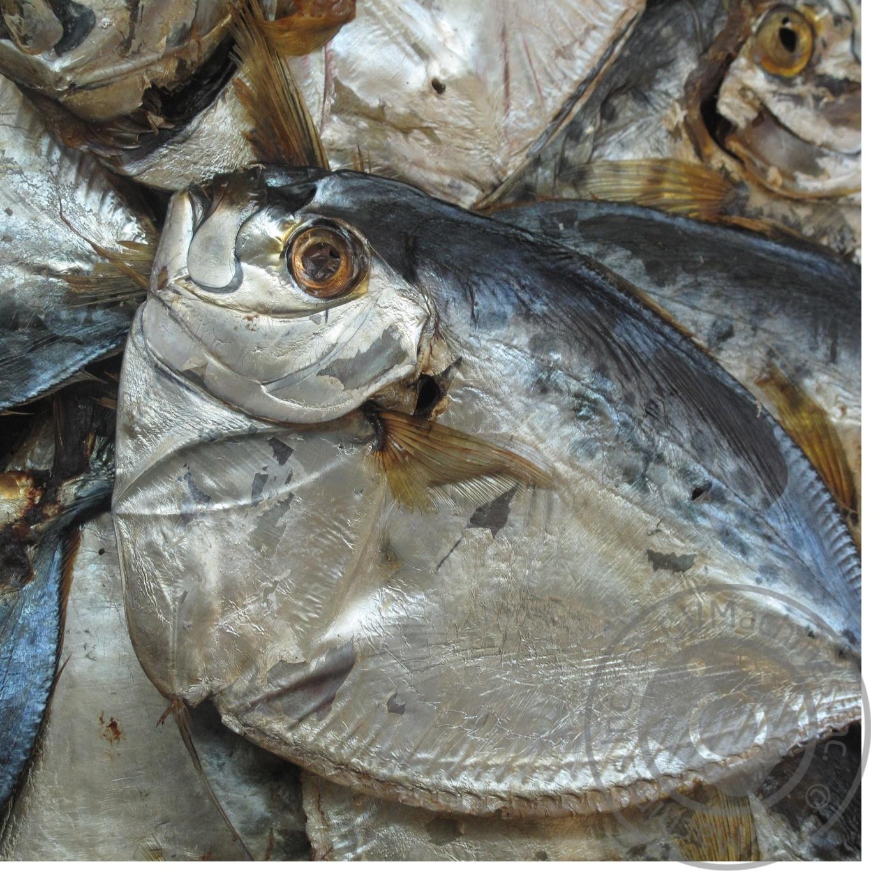 рыба холодного копчения рецепты с фото