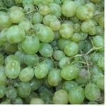 Фрукт виноград белое свежая Италия