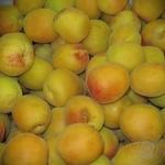 Фрукт абрикос свежая