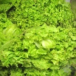 Greens lettuce green fresh Ukraine