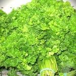 Зелень петрушка кучерява свіжа