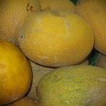 Fruit mellon yellow fresh Ukraine