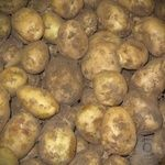 Картофель молодая Украина