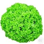 Зелень салат лолло-россо свіжа великий Україна