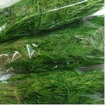 Greens dill packed 50g Ukraine