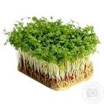 Мікрозелень кинзы Зеленый Дом 50г