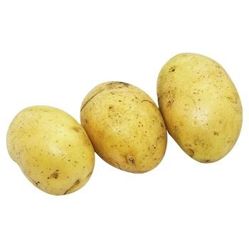 Картопля мита Королева Анна