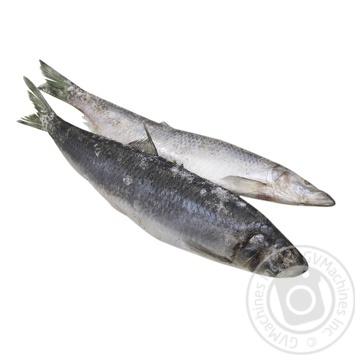 Fish herring frozen - buy, prices for Furshet - image 1