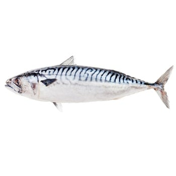 Frozen Big Mackerel