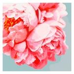 Картина по номерам Идейка Розовые пионы 40х40см