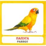 Sova Birds Set of Cards